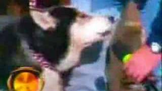funny animal bloopers