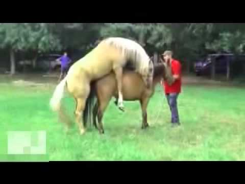 FUNNY HORSE MATING - YouTube