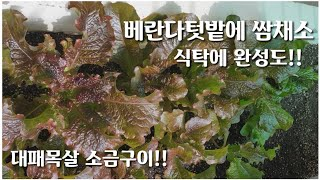 베란다텃밭 쌈채소로 대패목살 소금구이 쌈싸먹기!!