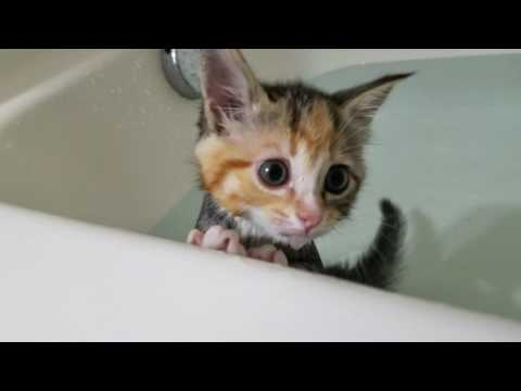 Kittens first bath!