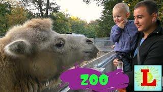Одесский зоопарк! знакомство с животными из мультиков Мадагаскар, Маша и Медведь... Видео для детей