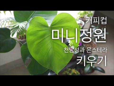 몬스테라 키우기 플랜테리어 최고의 식물