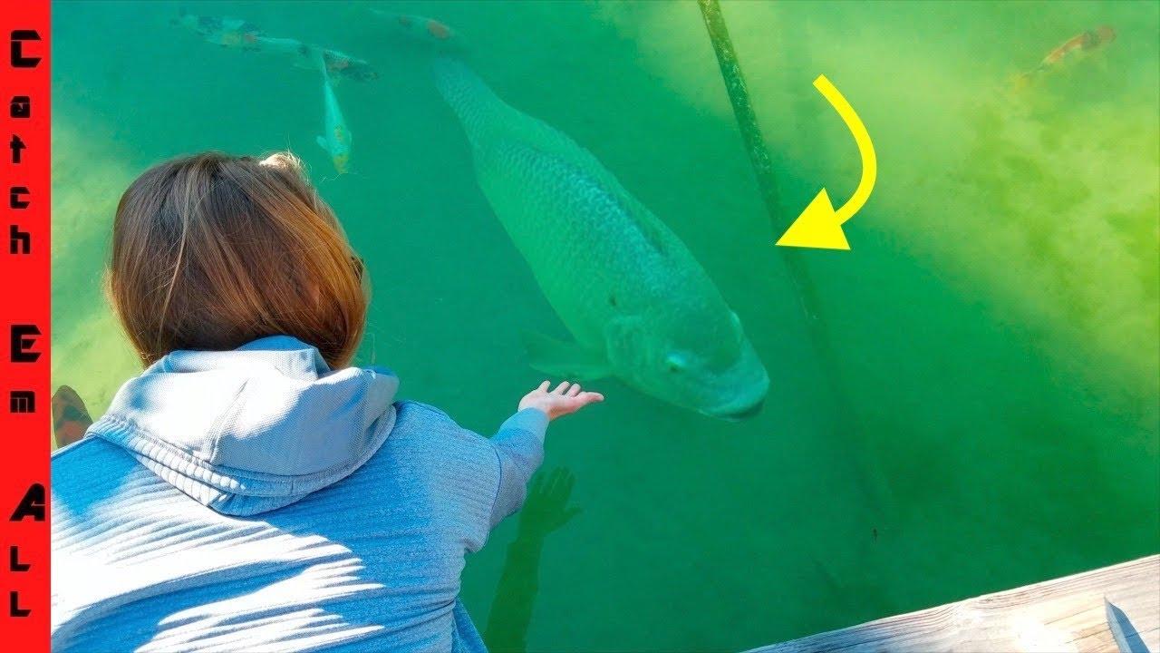 WORLD RECORD TILAPIA PET FISH!