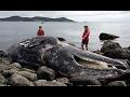 Fukushima Third of Sea Life DEAD! FEB, 6, 2017