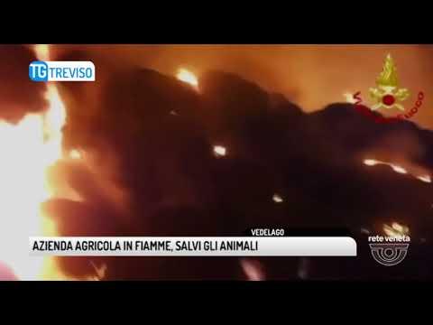 TG TREVISO (05/06/2018) - AZIENDA AGRICOLA...