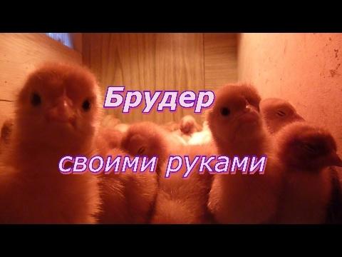 Брудер для цыплят и перепелов своими руками