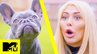 Celebs Vs Pets: Chloe Ferry vs Ivy