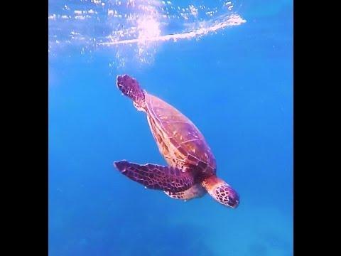 Maui Snorkeling at Kamaole Beach Park 3