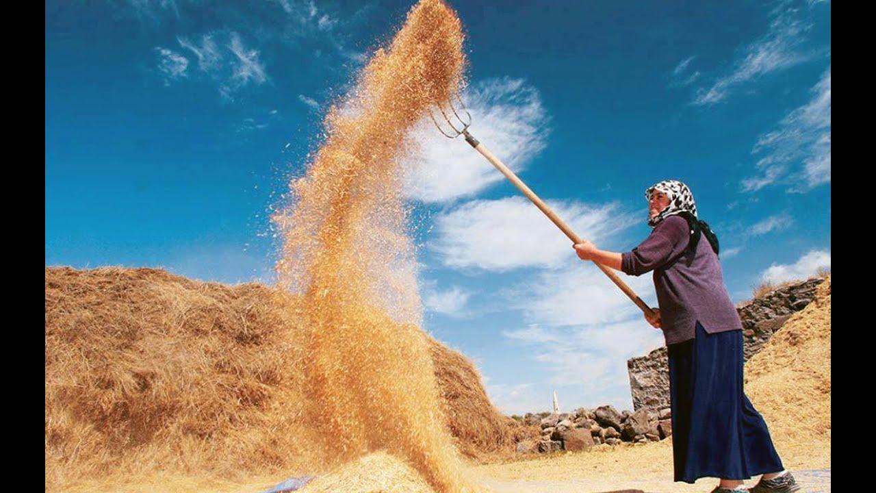EGE TÜRKÜLERİ -  Kırmızı Buğday
