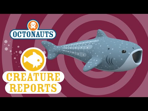 Octonauts: Creature Report - Whale Shark