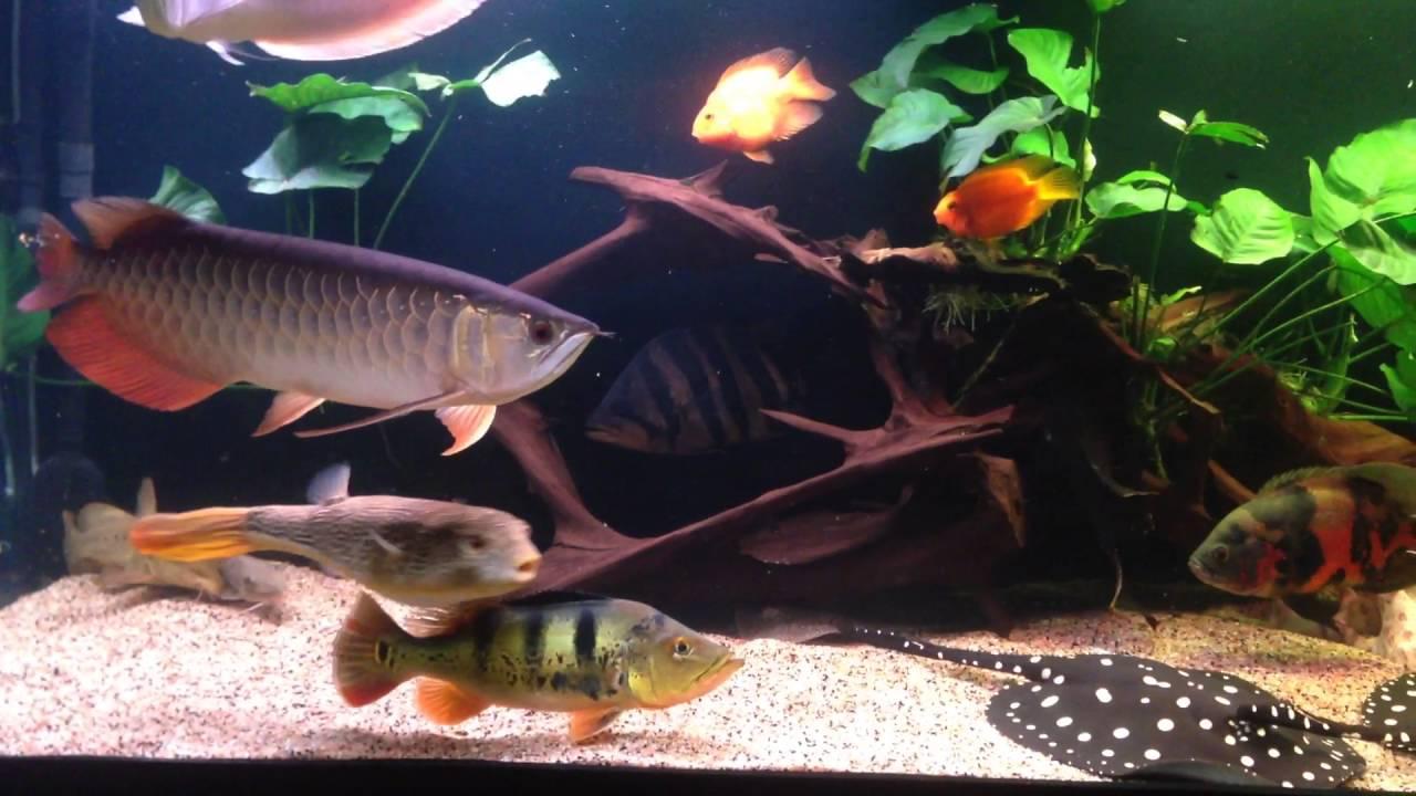 Строительство аквариума на 1000 литров и Сампа - YouTube