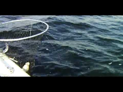 WHITEFISH FISHING LESSONS ON ROUND LAKE ONT.MPG