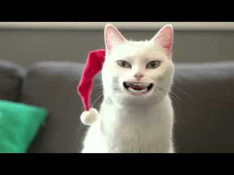 Cat Singing 'Jingle Bells' - funny viral video