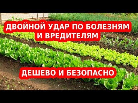 березовый деготь от вредителей сада и огорода