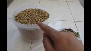 HOW TO MAKE CORIANDER POWDER AT HOME, special