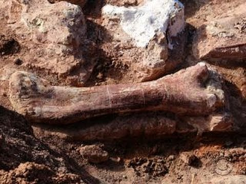 Scientists discover giant dinosaur fossils in Argentina