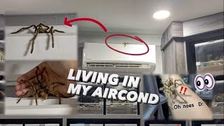 Escaped Tarantula was Living in my Aircond ?!! 😱
