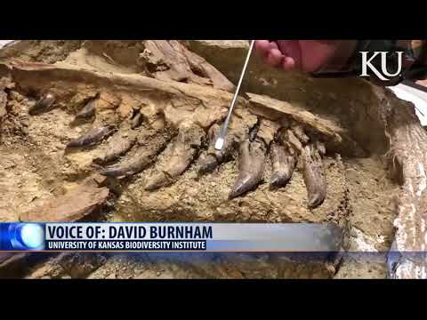 History Channel:  Young T rex found in Montana '1 in 100 million' discovery
