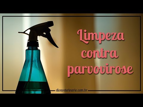 limpeza-contra-parvovirose- -divã-veterinário