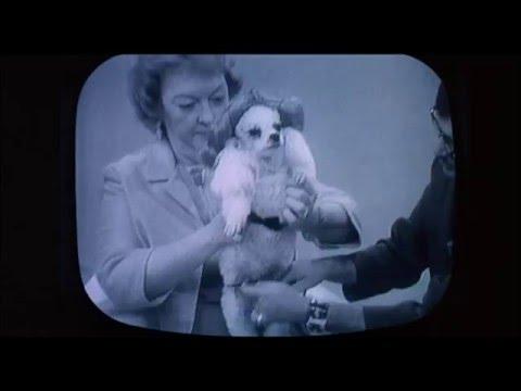 Midnight Cowboy (1969)  John Schlesinger, Poodle On TV , scene , HD 1080p