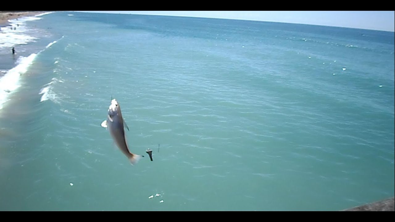 Fish caught off bogue inlet pier emerald isle nc for Fishing report emerald isle nc