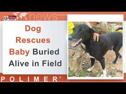 தாய்லாந்தில் புதைக்கப்பட்ட குழந்தையை மீட்ட நாய்   #DogRescuesBaby   #Thailand   #ViralVideo