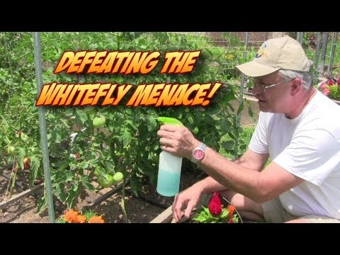 Defeating the Whitefly Garden Menace!