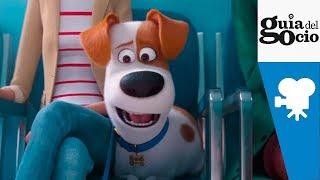 Mascotas 2 (The Secret Life of Pets 2) - Trailer español