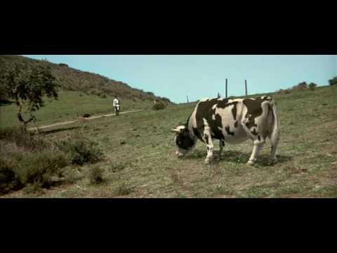 Джеки чан против коровы