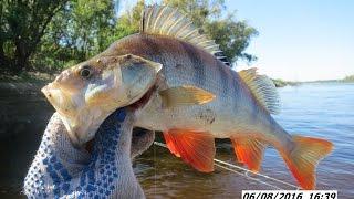 видео Интересные рыболовные туры