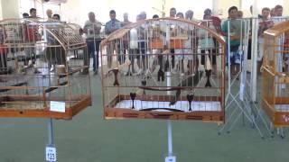 Repeat youtube video Trinca Ferro Canibal 239 cantos / Campeão no torneio em Florianópolis / Dia 23/12/2012