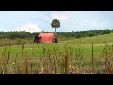Artificial Termite Mounds - Enrichment At Save The Chimps