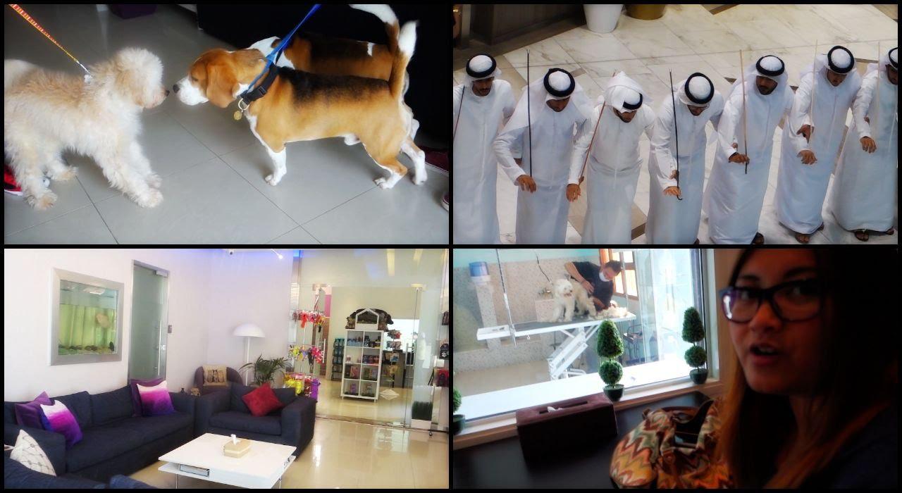 abu dhabi vlog no 93   cloud 9 pet hotel abu dhabi