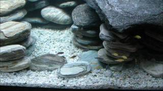 600l Malawi Cichlid Tank - Stand Build And Setup With Under Gravel Jets And Sump