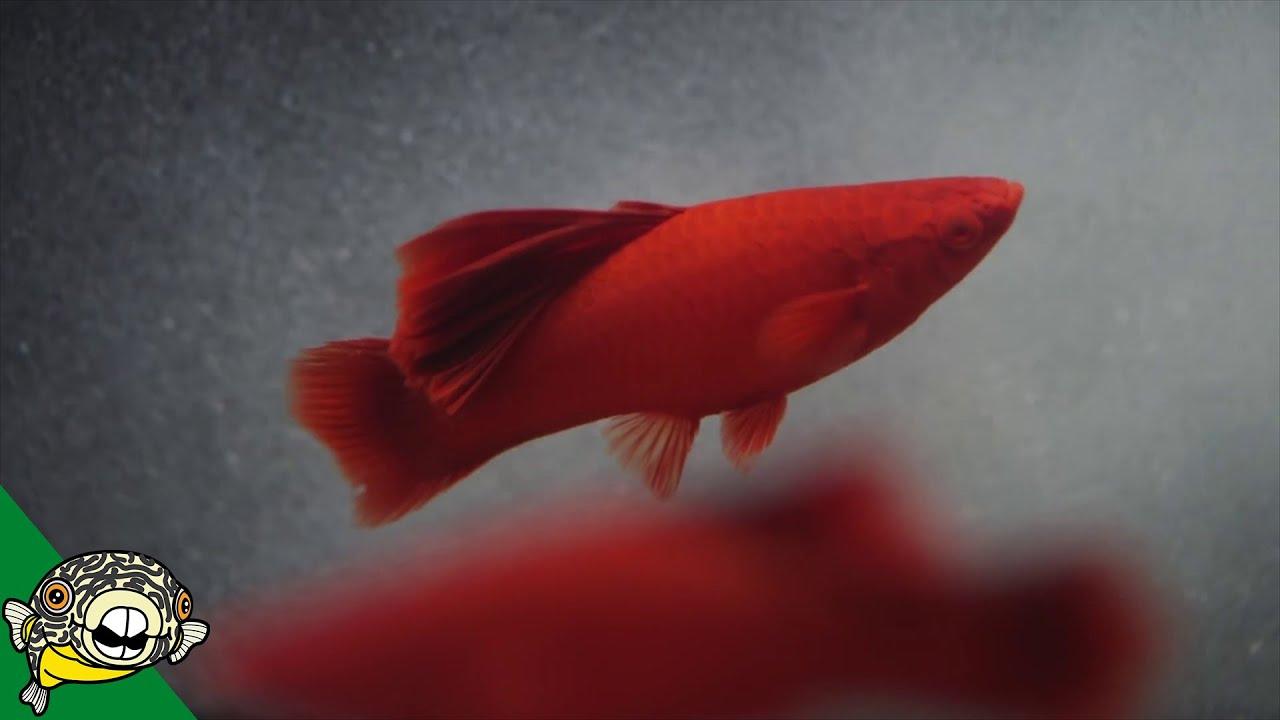a-true-fish-keeper-s-dream-quality-aquatics-pet-shop