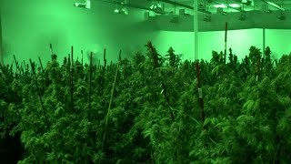 City of Mt. Clemens accused of holding secret meetings on pot licenses