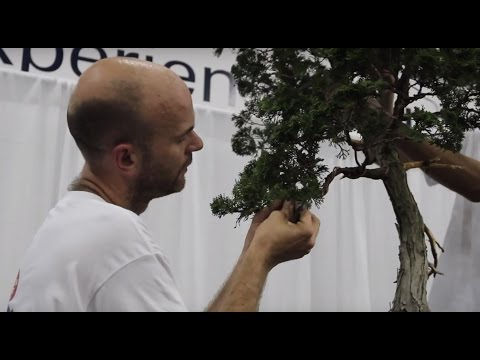Bonsai demonstration by Peter Warren