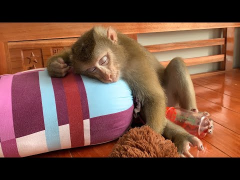 Monkey Baby Nui | Sleepy Nui looks very cute