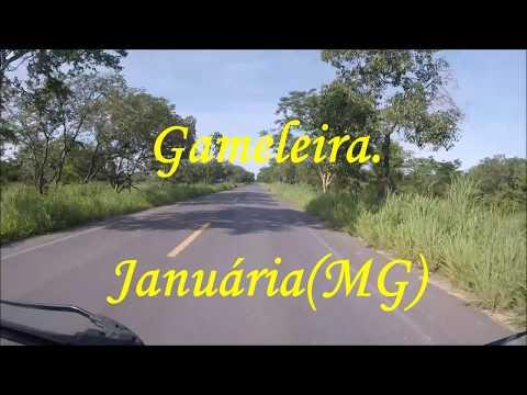 Gameleiras Minas Gerais fonte: i.ytimg.com