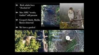 Part 2 - Eagles in your Home: Connecting with Wildlife through Remote Cameras