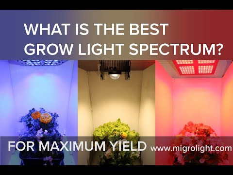 What Is The Best Grow Light Spectrum Youtube