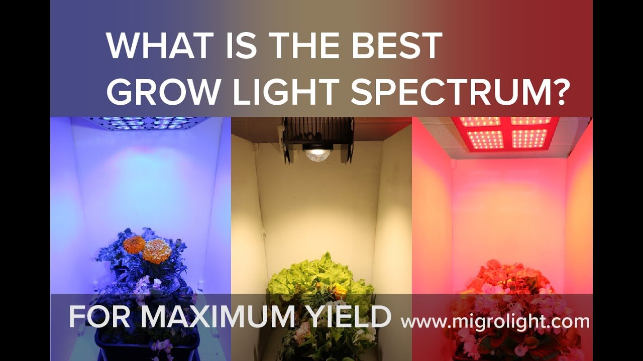 What Is The Best Grow Light Spectrum