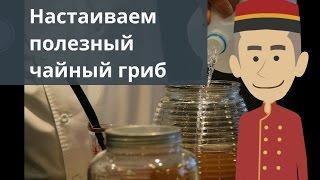 Настаиваем полезный чайный гриб
