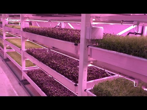 Farming under the streets of London