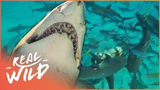 Sharks Business: Shark Action Like You