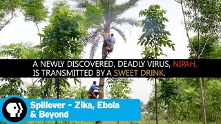 SPILLOVER - ZIKA, EBOLA & BEYOND | Tree Climber | PBS