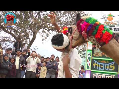 New Rajasthani Camel and Girl Dance 2017 | New Dj Song 2017