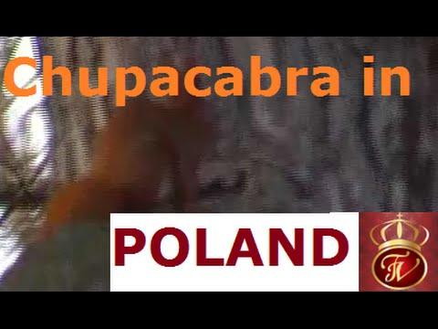 Chupacabra in Poland.