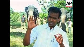 Twin elephants star attraction in Tamil Nadu