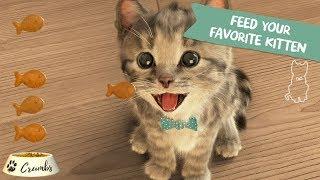 JOCURI CU PISICI - Pisica din Cutie - Joc cu pisicute amuzante pentru copii